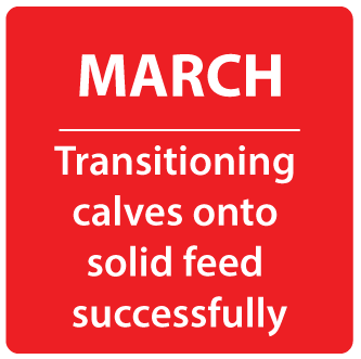 Transitioning calves onto solid feed successfully