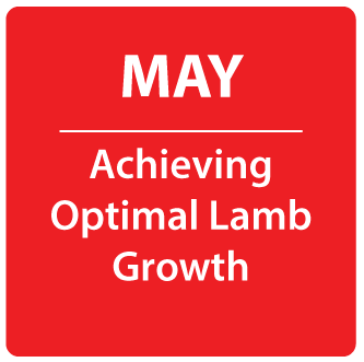 May- Achieving Optimal Lamb Growth