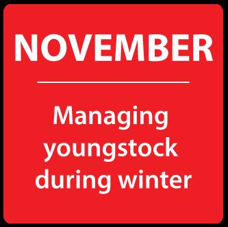 CRM - November Nutrition News
