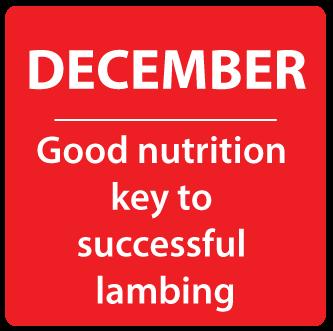 Dec- Good nutrition key to successful lambing