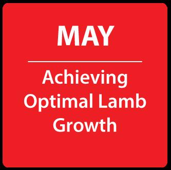 May- Achieving Optimal Lamb Growth